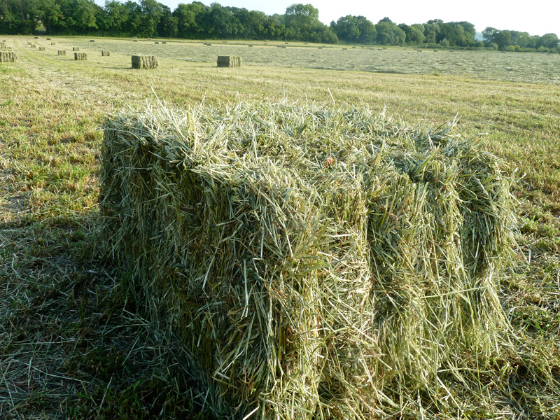 Quality Haylage Bales by Bowlby Equine of Oxfordshire Bowbed bowlby-equine-equestrian-supplies-oxfordshire-animal-horse-supplies-hay-haylage-shavings-horse-bedding-supplies_animal_bedding_hay